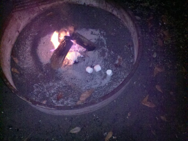 Marshmallow casualties